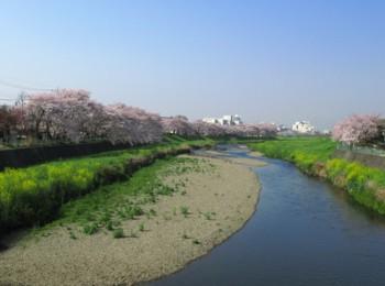 柳瀬川①.jpg