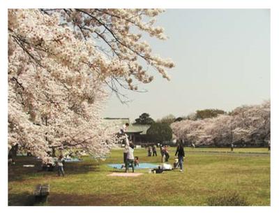 都立小金井公園.PNG