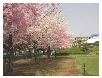 文理台公園.PNG