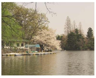 武蔵関公園.PNG