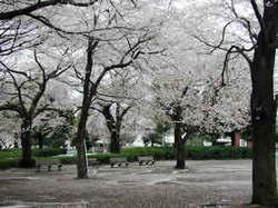 文理台公園.jpg
